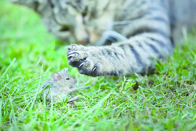 Katze bringt maus ins haus