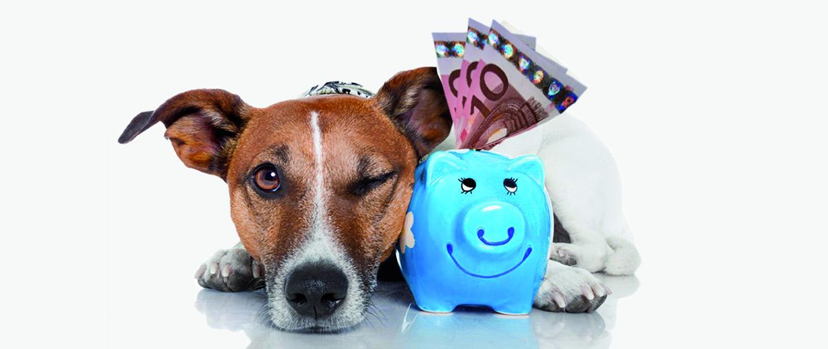 Luxprivat Wow Das Kosten Unsere Haustiere Pro Monat